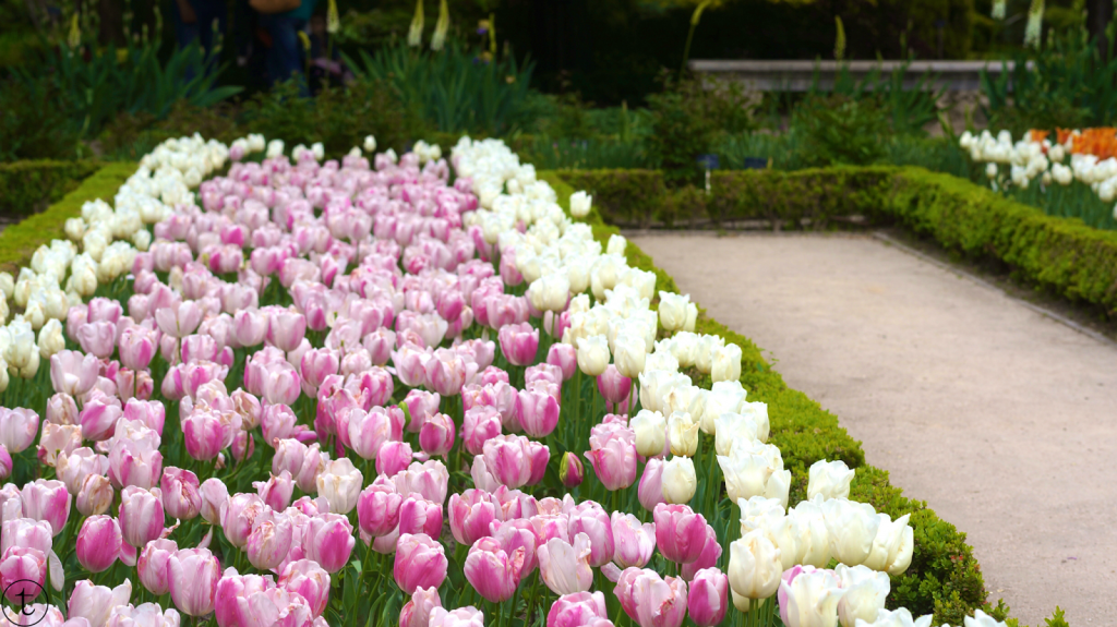 tulips at the botanical garden in madrid travel diary